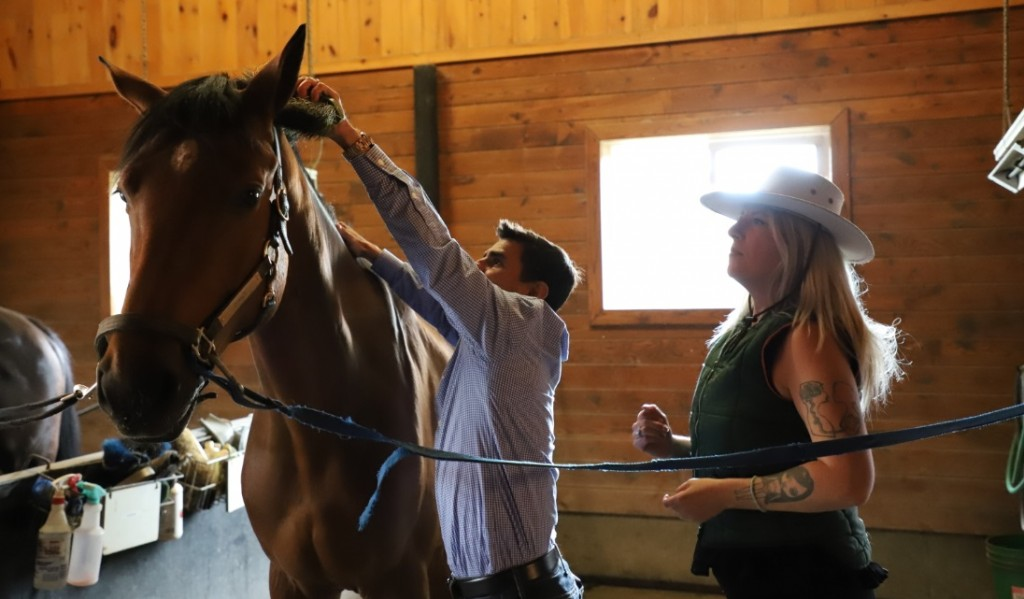 Eurico Rosa da Silva brushes sport horse